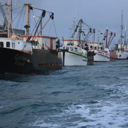 Oyster Fleet