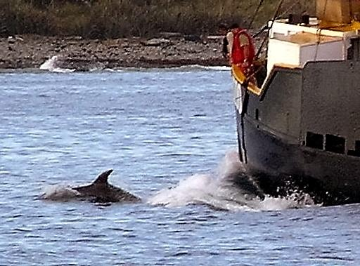 Dolphin ahoy